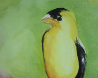 Goldfinch (Watercolor)