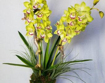 Green Cymbidium Orchid Silk
