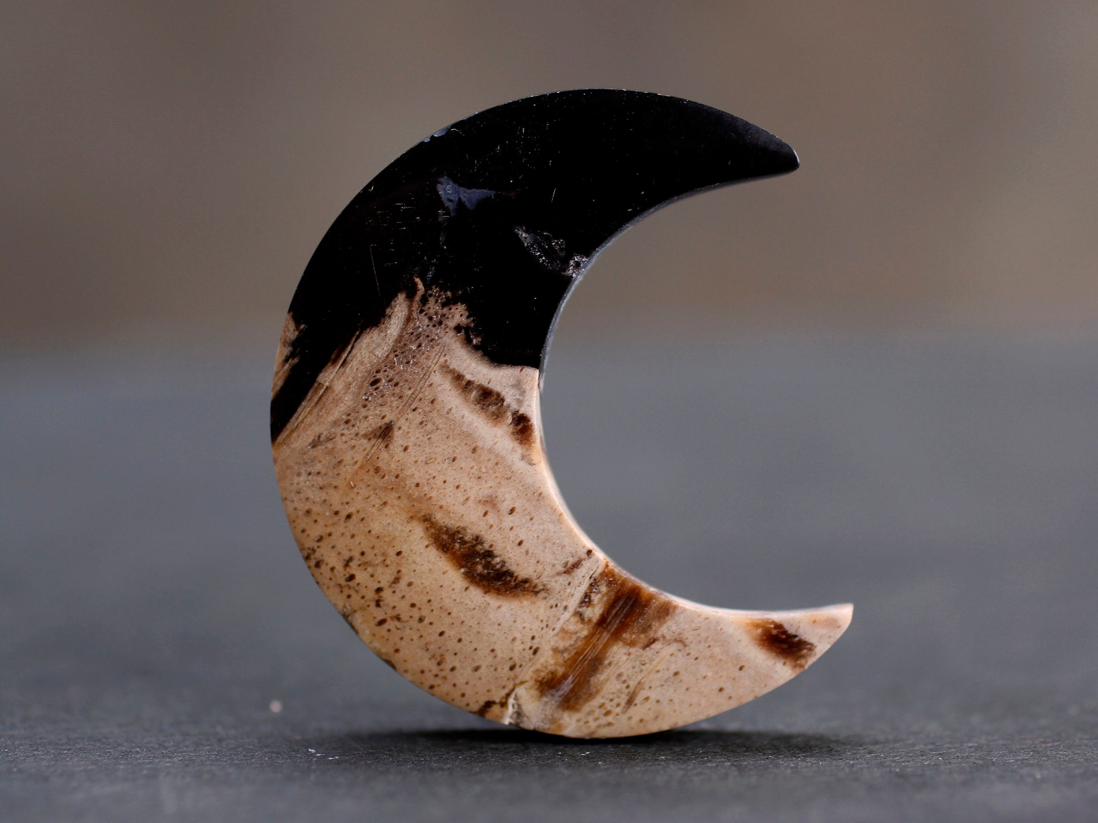 Fossilized Palm Root Crescent Moon Cabochon