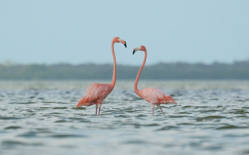 Framed Flamingo pair image 0