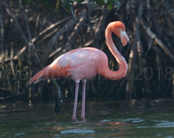 Framed Flamingo in the state of FLORIDA