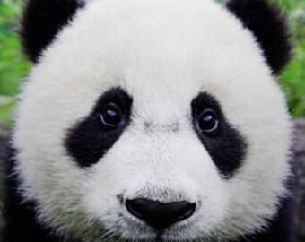 Bear Face Cushion With Cover   Panda (Black + White) Bear