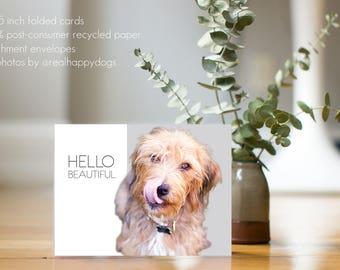"SAPHIRA ""Hello Beautiful"" - dog rescue, mix breed dog card, minimal, modern, dog photography, dog rescue"