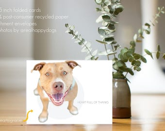 """GRACIE """"Heart Full of Thanks"""" - dog thank you card, minimal design, dog photography, Pit Bull, Rescue dog"""