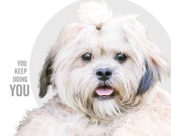 You Keep Doing You - BODHI - dog greeting card, minimal design, dog photography, funny dog card