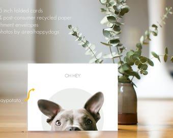 Oh Hey - TATER - dog greeting card, thinking of you, minimal design, dog photography, Pit Bull, Staffy, Rescue dog