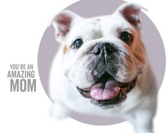 You're an Amazing Mom - MARLEY - dog greeting card, minimal design, dog photography, English Bulldog, Rescue dog, dog mom card