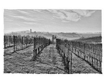Rows in Alto Monferrato.