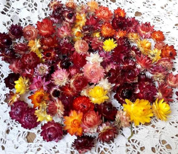 100 Bio kleine getrocknete Blumen gemischt Farben Strohblumen Köpfe Hochzeiten Dekor getrocknete Blume Konfetti Florist Versorgung DIY Versorgung Set von 100