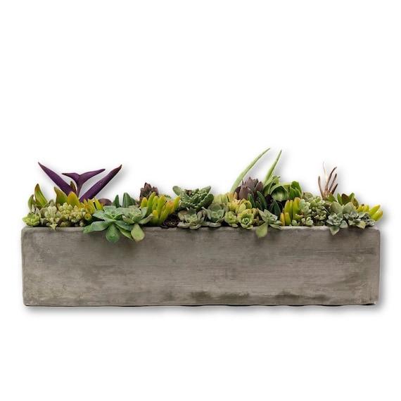 Beautiful 18 Concrete Rectangular Planter//Concrete Succulent | Etsy