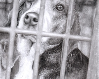 Gelert - Drawing of a Dog Bound for Slaughter (30% of profits go to an animal sanctuary)