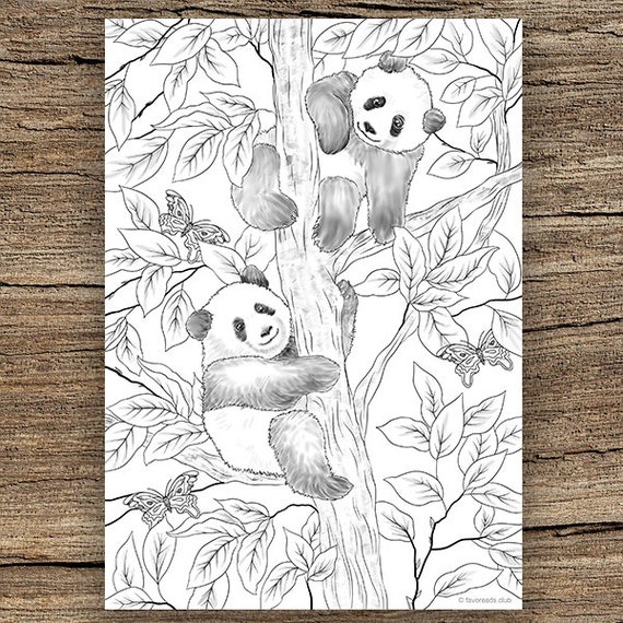 Panda Coloring Pages – coloring.rocks! | 570x570