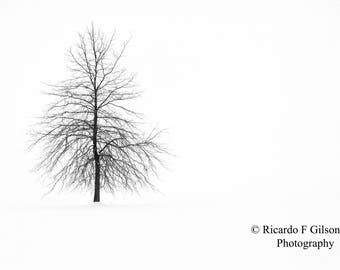 Black and White Photography, Landscape Photography, Winter Landscape, Single Tree Photo, Snow, Tree, Nature Photography, Winter Photography