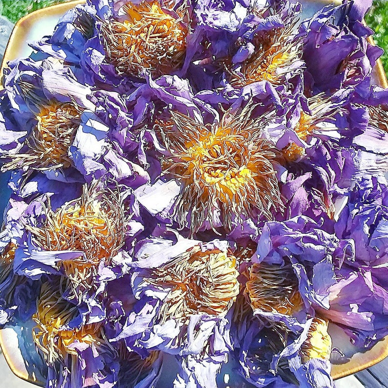 Dried Blue Lotus Flower Egyptian Sacred Blue Lily Nymphaea Etsy