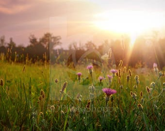 Sunset on a Field of Flowers | Landscape Photo Art | Gift | Fine Art Photography | Personalization | BDPhotoShoppe | Home Office Decor
