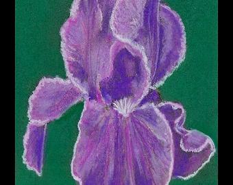"PRINT of Original Signed Pastel Painting, Flower Artwork, ""Amazing Iris"""
