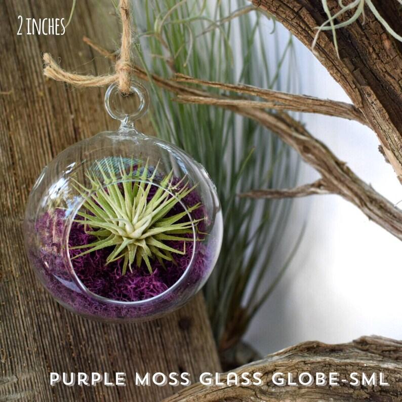 Small Hanging Glass Globe Air Plant Terrarium Kit Tillandsia Etsy
