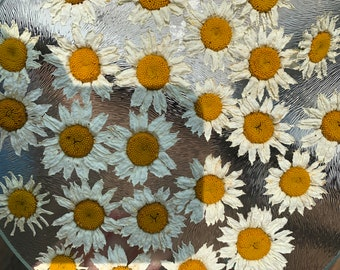 Real Dried off-white Daisy Flower golden yell center 11 count in a packet.  Dried natural- no stems. Perfect for resin, soap, bridal shower