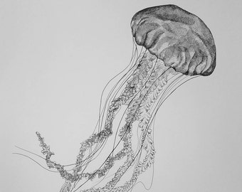 Jellyfish Pen & Ink Print