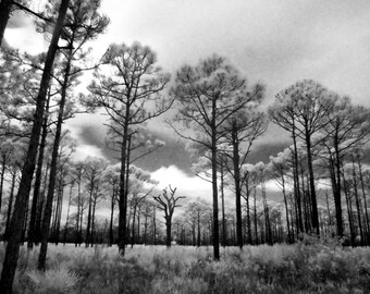 Venice Forest, Infrared