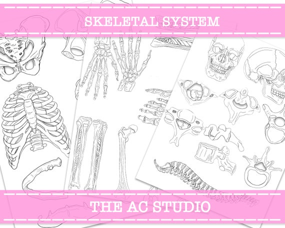 It's just a picture of Printable Skeletal System intended for drawing