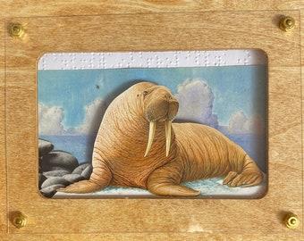 Lone Walrus