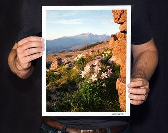 "Wildflower Print, Rocky Mountain National Park Photo, Colorado Landscape Photography, Fine Art Photography, Longs Peak, ""Alpine Columbines"""