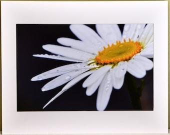 Serein Daisy: Fine Art Photography Mounted and Matted