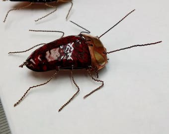 Copper Enamel Beetles