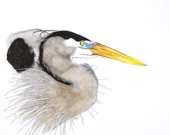 Great Blue Heron Giclée