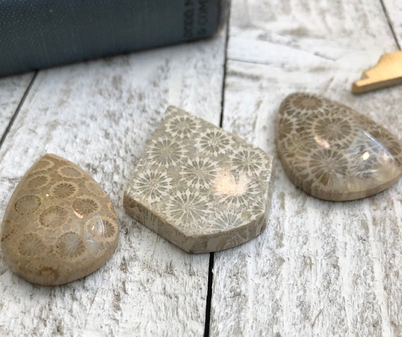 3 Pcs Natural Fossil Coral Cabochons  Handmade Polished Fossilized Coral Jewelry Making Gemstone Lot Crystal Cabochon Stone Cabochon