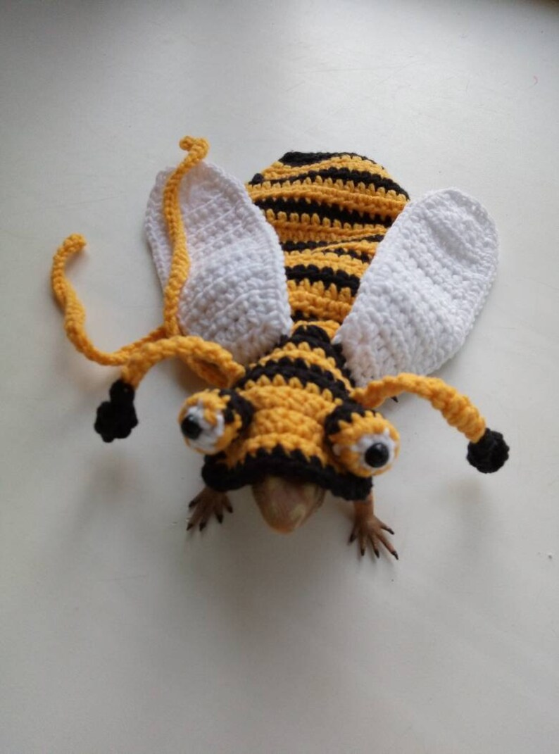 Bee bearded dragon costume bee rat costume Bee guinea pig image 5