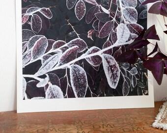 Purple leaf print / Leaf print / Frosty leaf print