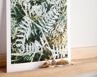 Leaf print / Floral print / Botanical print