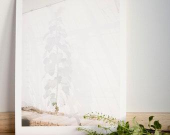 Sunflower print / Greenhouse print / Plant lover print