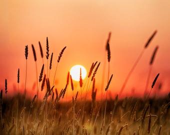 Grain waves Sunset