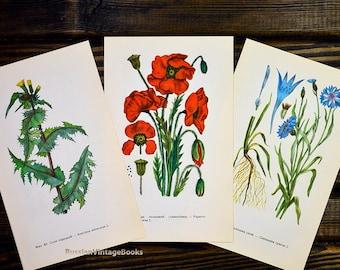 19th-c Pub. J sepia botanical print Flowers /& Plants Plate 57 O/'Kane