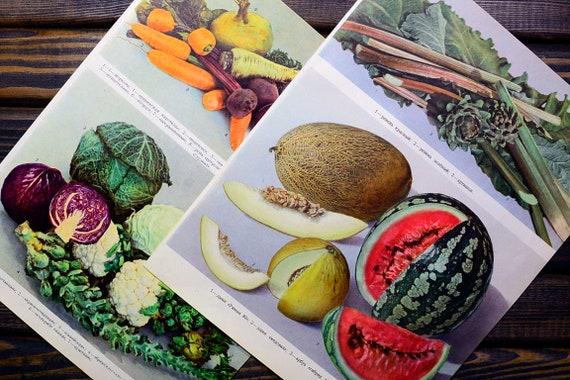 Copies légumes, de grand cru de Fruits, légumes, Copies poires, abricots, prunes - livre authentique feuilles années 50-60 ' s 821049
