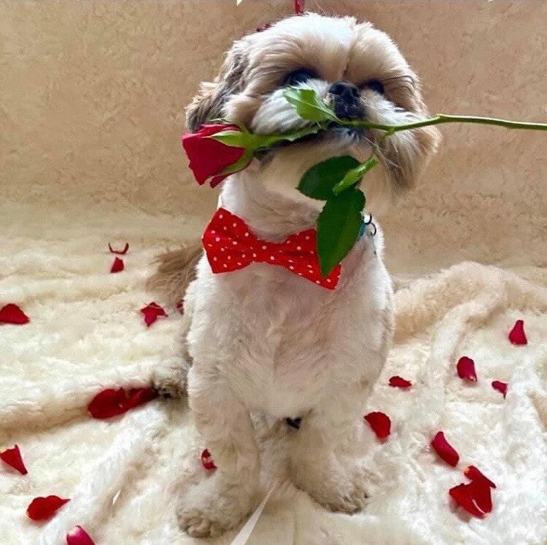 Handmade Red Polka Dot Dog Cat Bow Tie