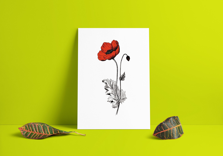 Red poppy poppy flower poppy art wall art printable art | Etsy