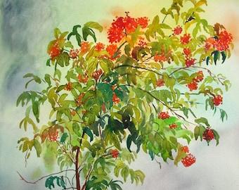 Ixora plant Original watercolor artwork