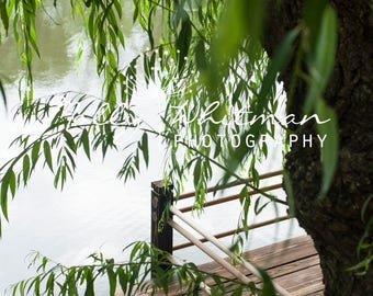 Japanese Willow Digital Photography