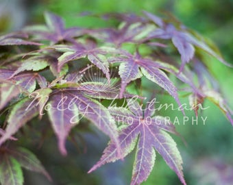 Japanese Garden Digital Photography