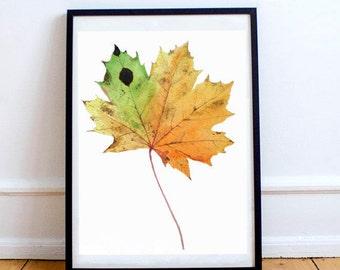 Brilliant Large Maple Leaf