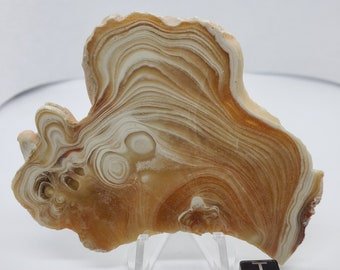 "Kokoweef ""Cave Onyx"", ""Cave Popcorn"" calcite and aragonite slab freeform Jurassic Period (155 mya) Cleansing and Grounding"