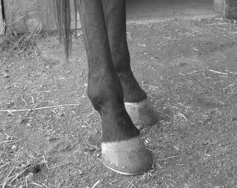 All Legs