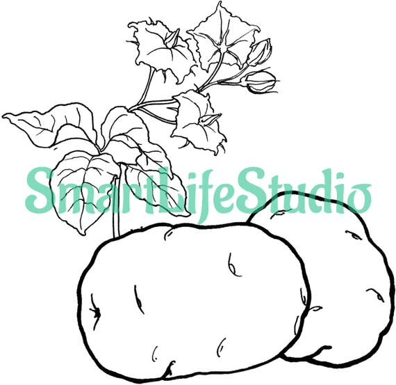 Ripe Vegetables-Coloring book for kids-13 coloring page-PDF Coloring Book,  Printable Coloring Hand Drawn, Digital, Print, Instant Download