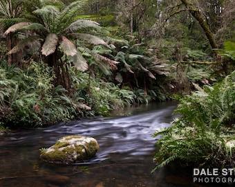 Rainforest Landscape Print