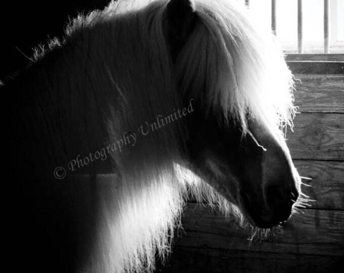 Pony Silhouette, B&W Print