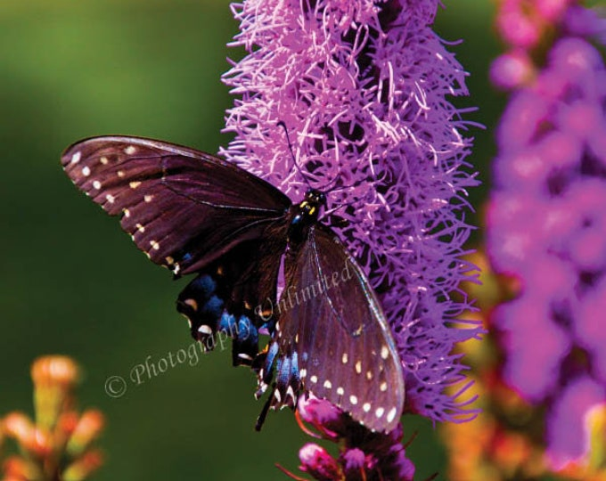 Butterfly and purple flowers in summer